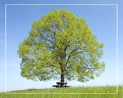 PROTEGEONS LA NATURE arbre